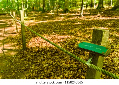 Braille trail in forest with rope and braille sign. Sign says (Resting area to the left) in Swedish. Location Omberg eco park in Sweden.