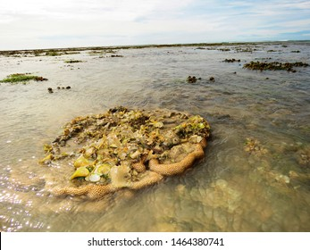 Brain coral and seascape, Kurusadai Island, Gulf of Mannar Biosphere Reserve, Tamil Nadu, India.