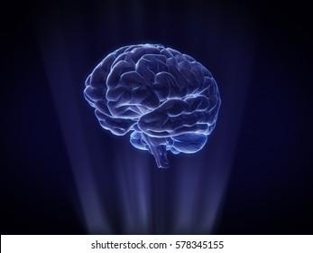 brain Hologram Wireframe Style.3D rendering
