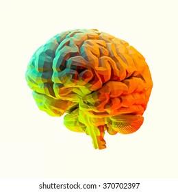 Brain Model Low Poly