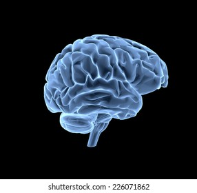 Brain model xray look isolated on white background