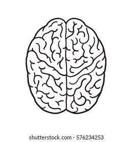 Brain outline illustration