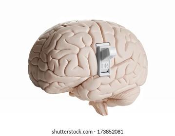 Brain power. Brain model with a light switch