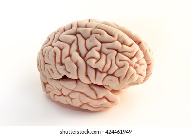 brain side view, isolated on white background