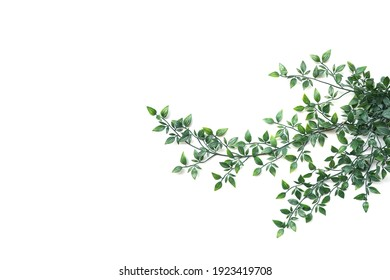 A branch of artificial tree leaf on white background with copy space
