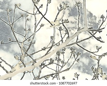 branch background sky