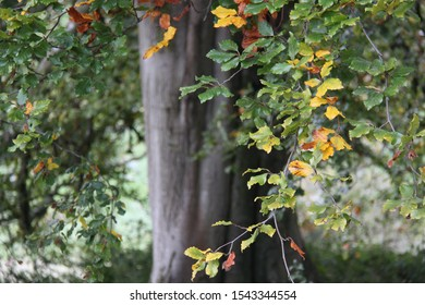 branch of beautiful autumn leaves with tree trunk in the background