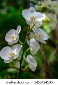 a branch of a beautiful orchid outdoors amidst nature