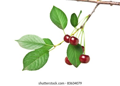 branch with berries cherry  isolated on white background