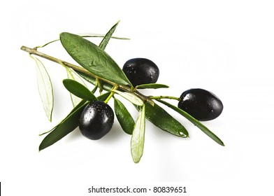 branch with black olives on white