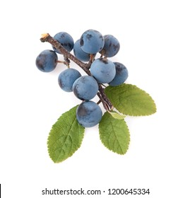 branch with blackthorn berries. Autumn berrie isolate on white background.