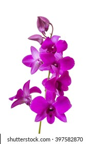 Branch with blooms of purple orchid. Isolated on white background.