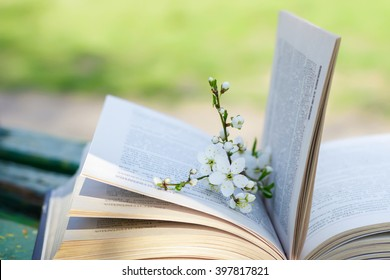 The branch of blossoming apple tree with green leaves lies is in an open book on a bench on a green background. Spring in the park