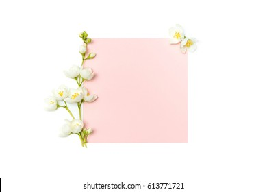 branch of blossoming jasmine and blank pink card isolated on white background