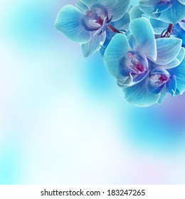 Branch of the blue orchid on beauty background