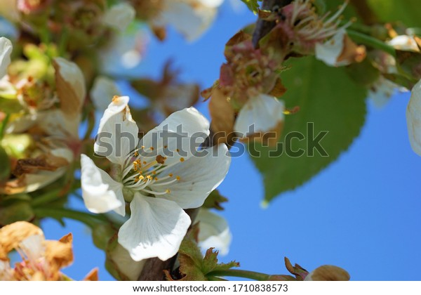 a branch with cherry blossoms against the blue sky