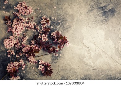 branch with cherry pink blooming flowers on rustic background