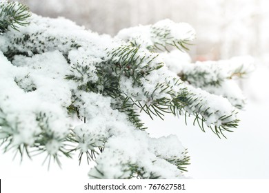 A branch of a Christmas tree under the snow. Snowfall