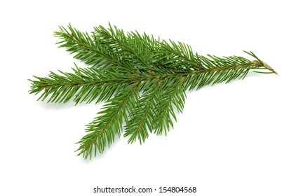 branch and cone on a white background
