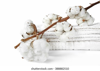 branch of cotton and white cotton towels isolated on white background
