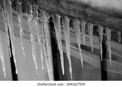 A branch covered with ice close. Black and white