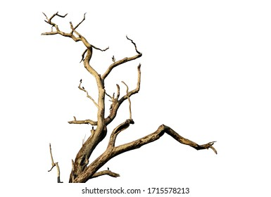 Branch of dead tree with clipping path isolated on white background.