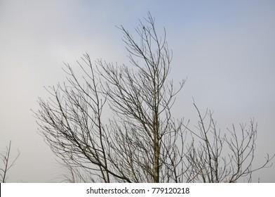 Branch of dead tree,bare tree