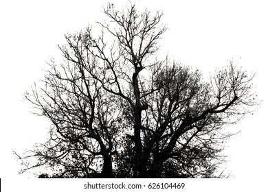 Branch of dry tree on white background
