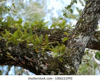 Branch Fern Green Jungel