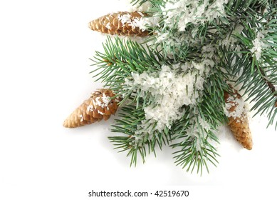 Branch of fir tree in snow on the white background