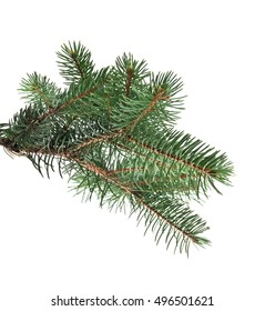 branch of fir-tree is isolated on a white background