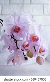 Branch of flowers of pink orchids