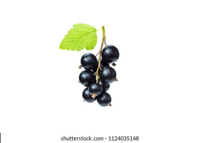 Branch of fresh black currant with green leaf, juicy black currant berries, isolated on the white background