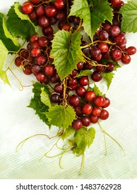 Branch of fresh ripe red grapes.