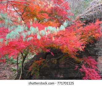 A branch of green leans across the sea of red leaves. With a background of a moss coated boulder.