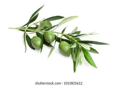 Branch of green olives isolated on white background.