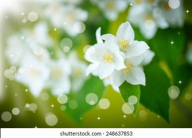branch of jasmine on an abstract background