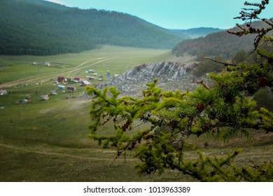 A branch of larch with cones on the background of a landscape with mountains and village