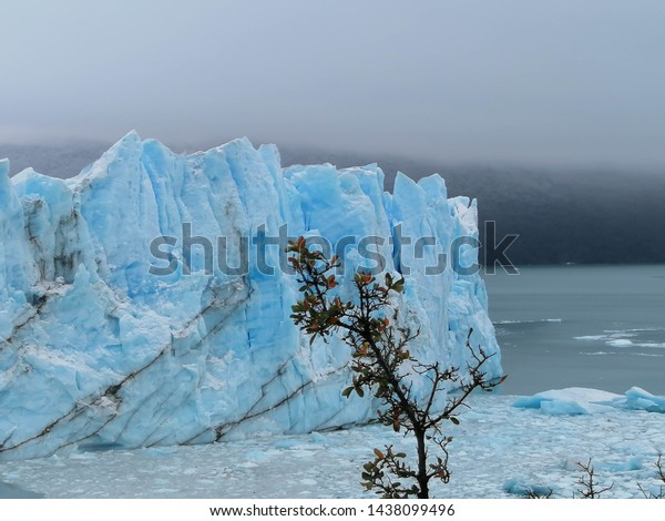 """Branch with leafs in front of the wall of the glacier """"Perito Moreno"""""""