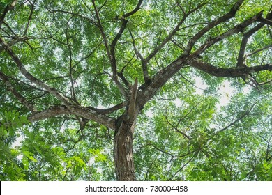 branch and leave tree background