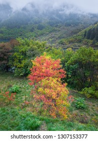 A branch with leaves painted in autumn colors in Huanglong National Park near Jiuzhaijou - SiChuan, China