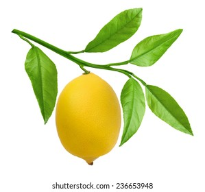 Branch of lemons with leaves isolated on white background