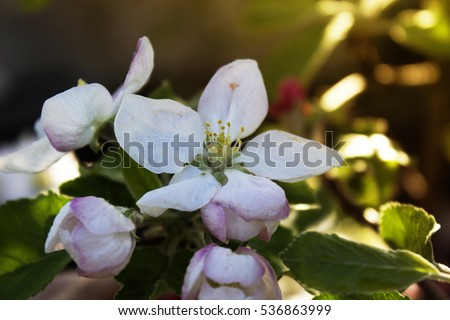 Branch Little Pink Flowers Twig Shrub Stock Photo Edit Now