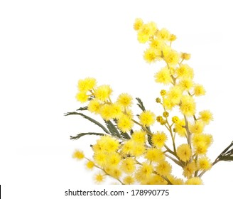 Golden yellow flowers images stock photos vectors shutterstock branch of mimosa acacia tree with yellow flowers isolated on a white background mightylinksfo