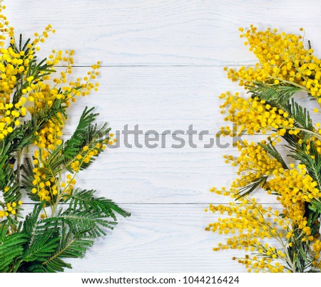Branch mimosa acacia tree yellow flowers stock photo edit now branch of mimosa acacia tree with yellow flowers on a white wooden background mightylinksfo