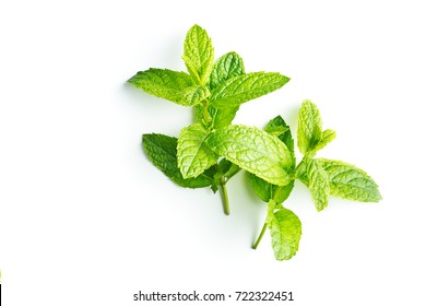 Branch mint leaves isolated on white background.