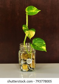 A branch of money plant (Epipremnum aureum) in a glass bottle containing Indian rupee coins. Conceptual image of financial growth.