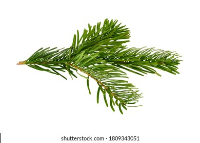 Branch of Nordmann Fir Christmas Tree. Green spruce or pine branch with needles. Isolated on white background. Closeup top view.