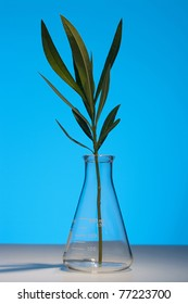 The branch of oleander in the laboratory flask, background - blue.