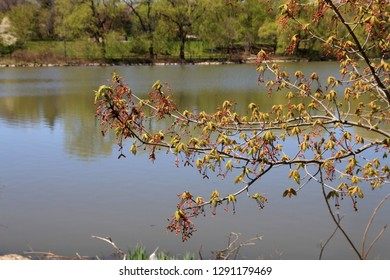 Branch on the water background